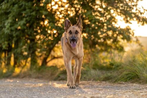 julia dog speed (35 of 65)
